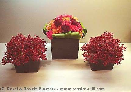 Carnation Berry Box Trio - Flower Arrangement