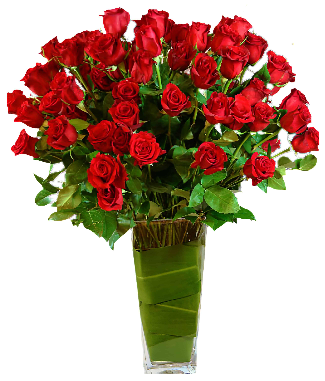Bellissimo 100 Long-Stemmed Roses