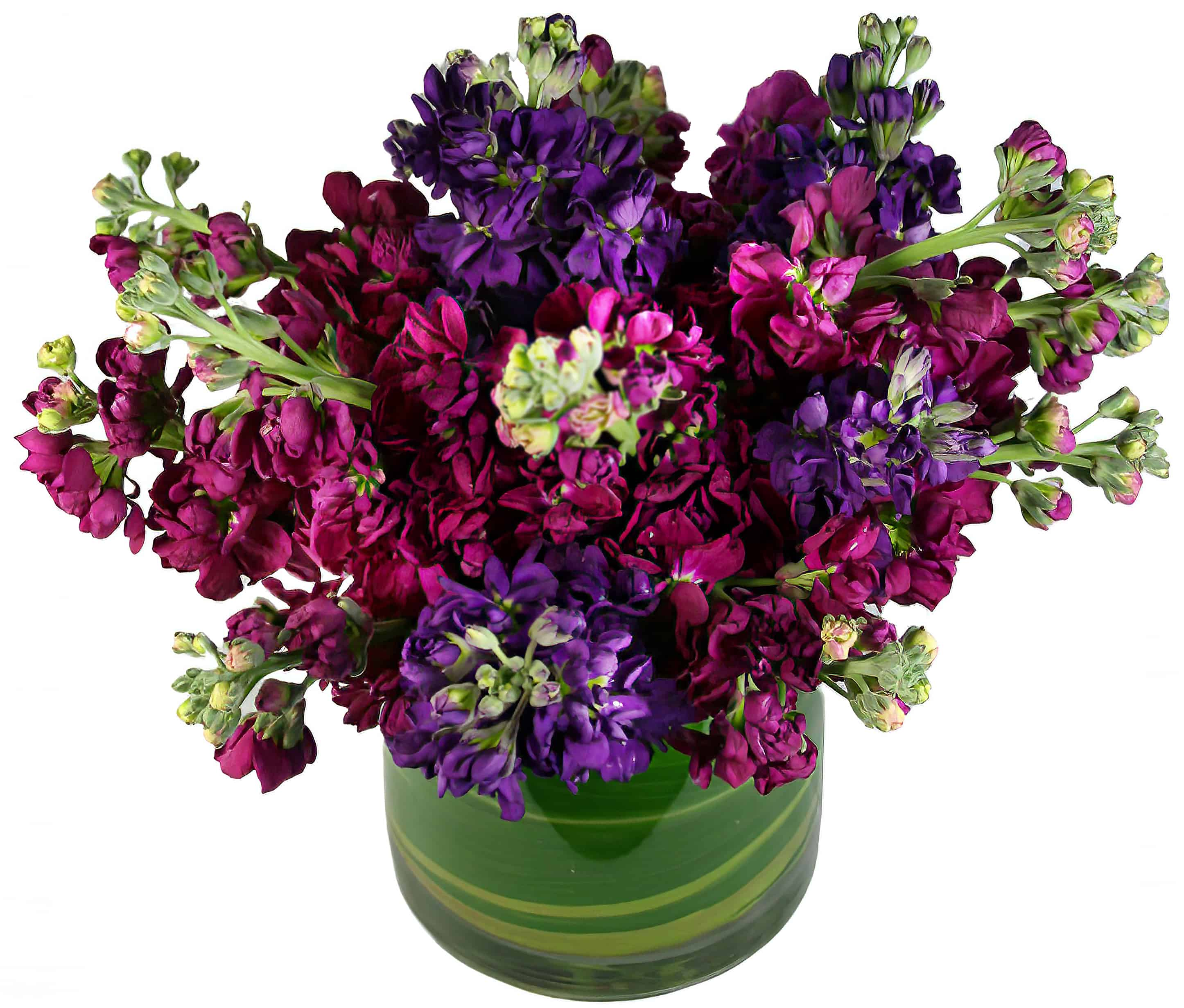 Colorful Matthiola Arrangement