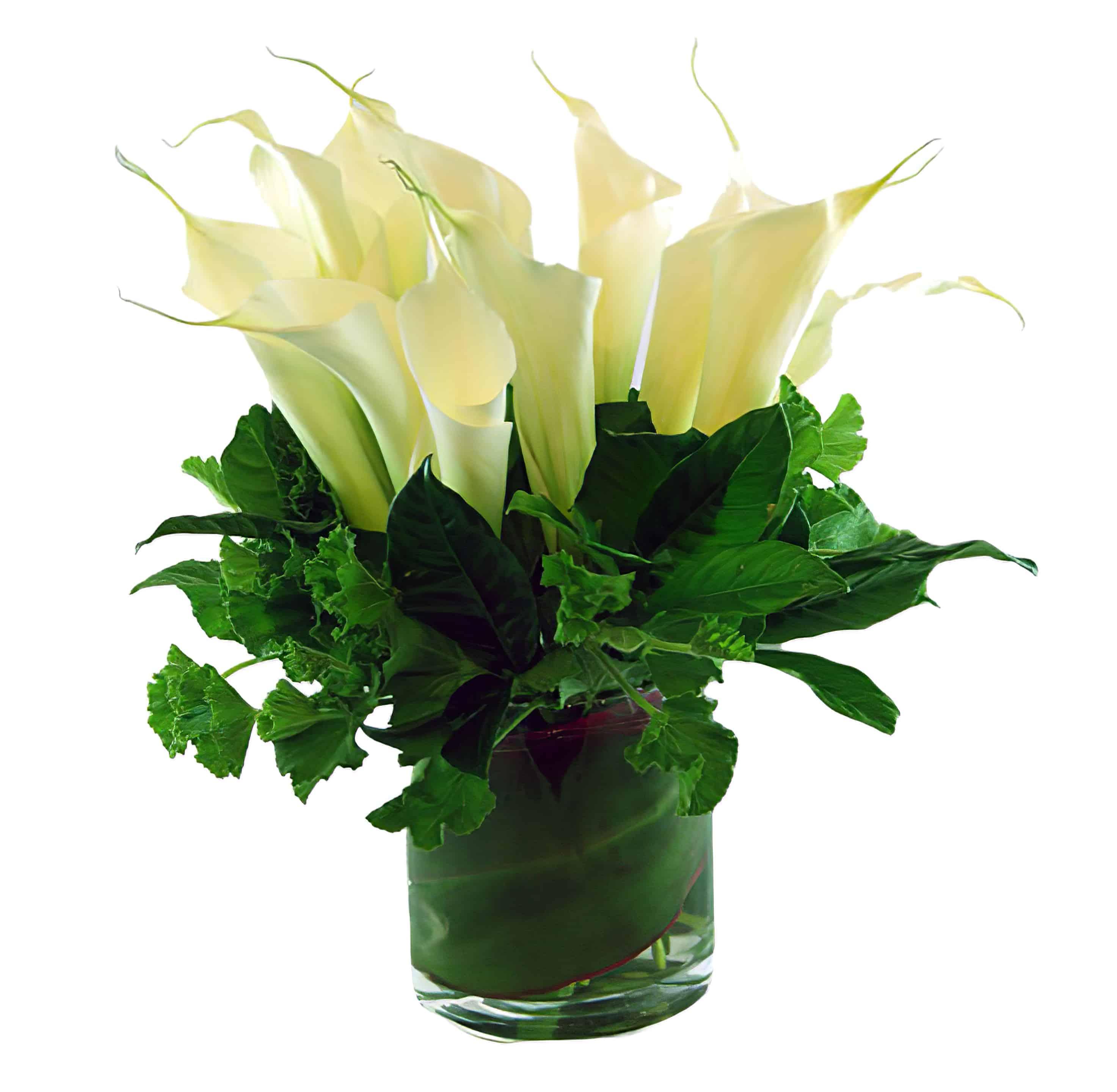 Calla Lily Esplosione Flower Arrangement