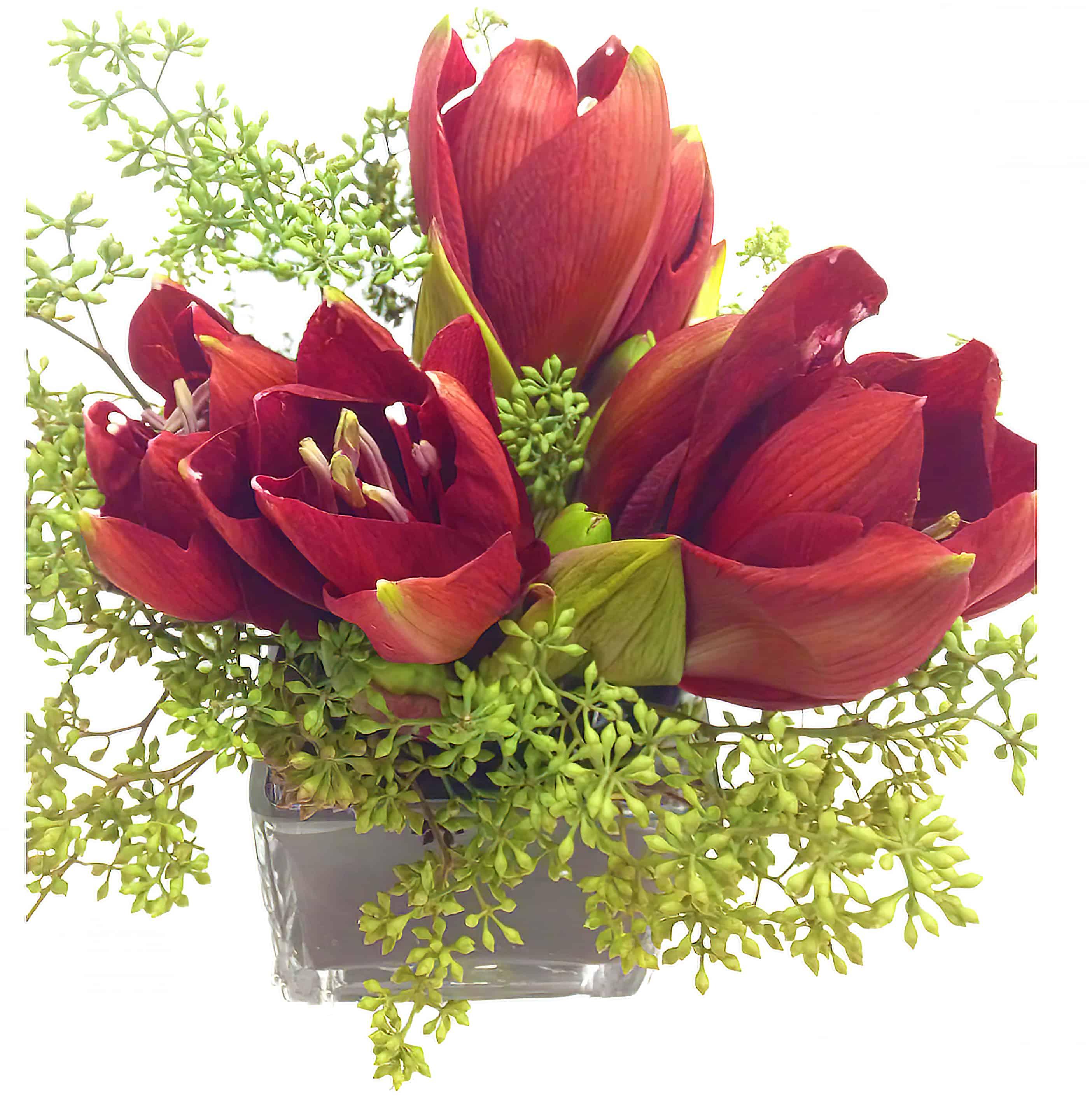 Red Amaryllis Flower Arrangement
