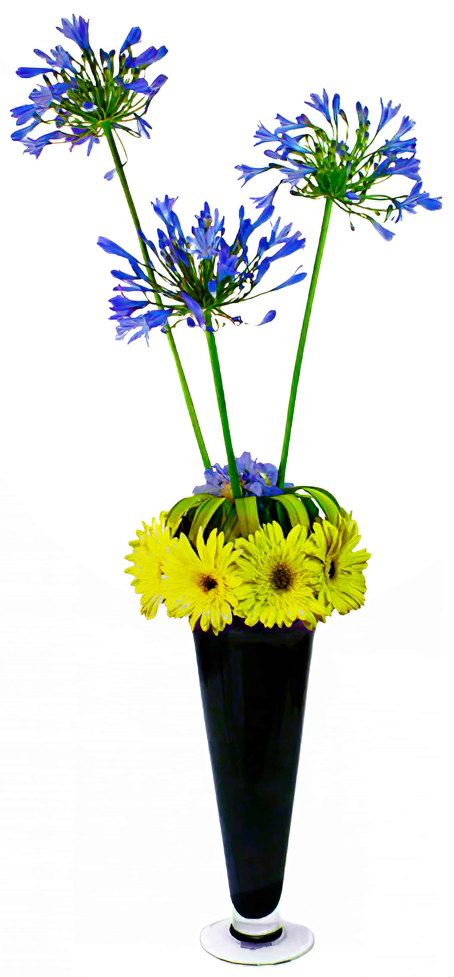 Big Bang Theory Flower Arrangement