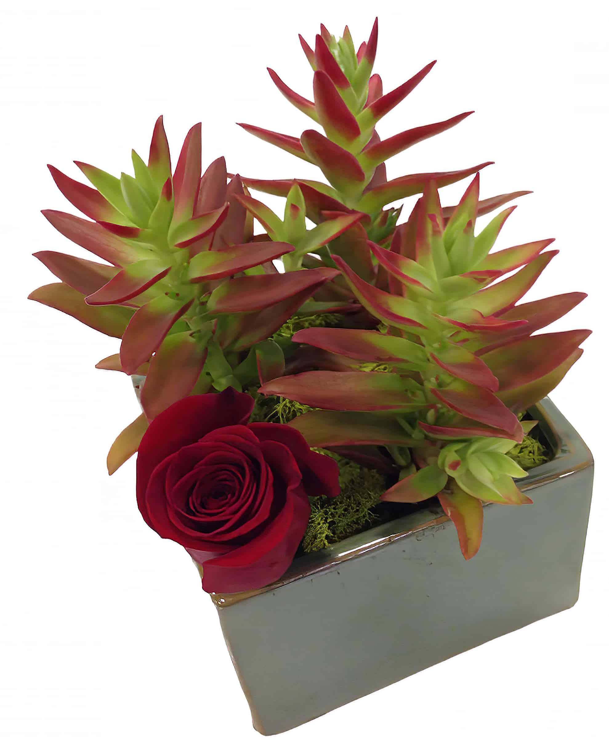 Succulent Rose Garden