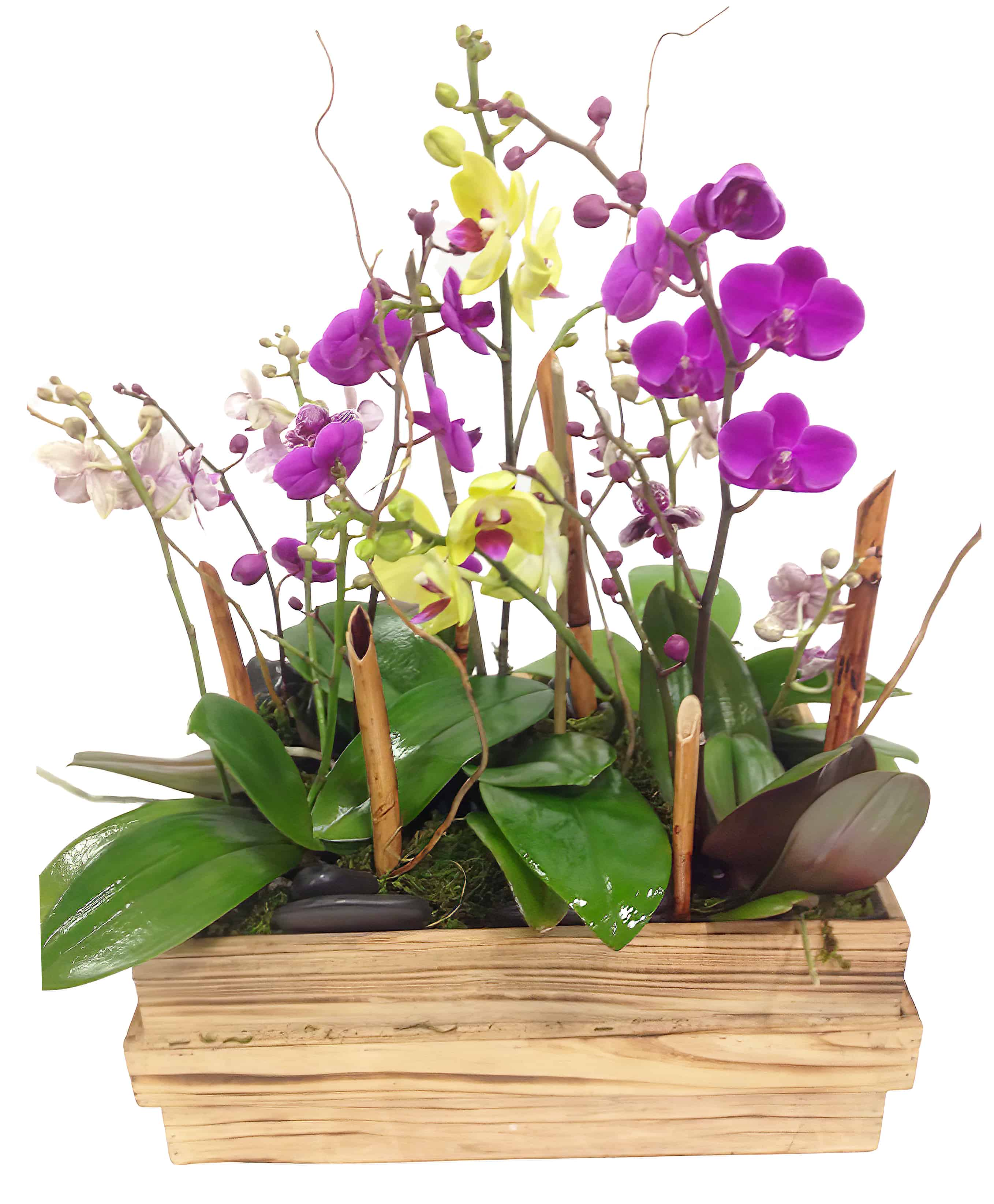 Boutique Phalaenopsis Orchid Planter