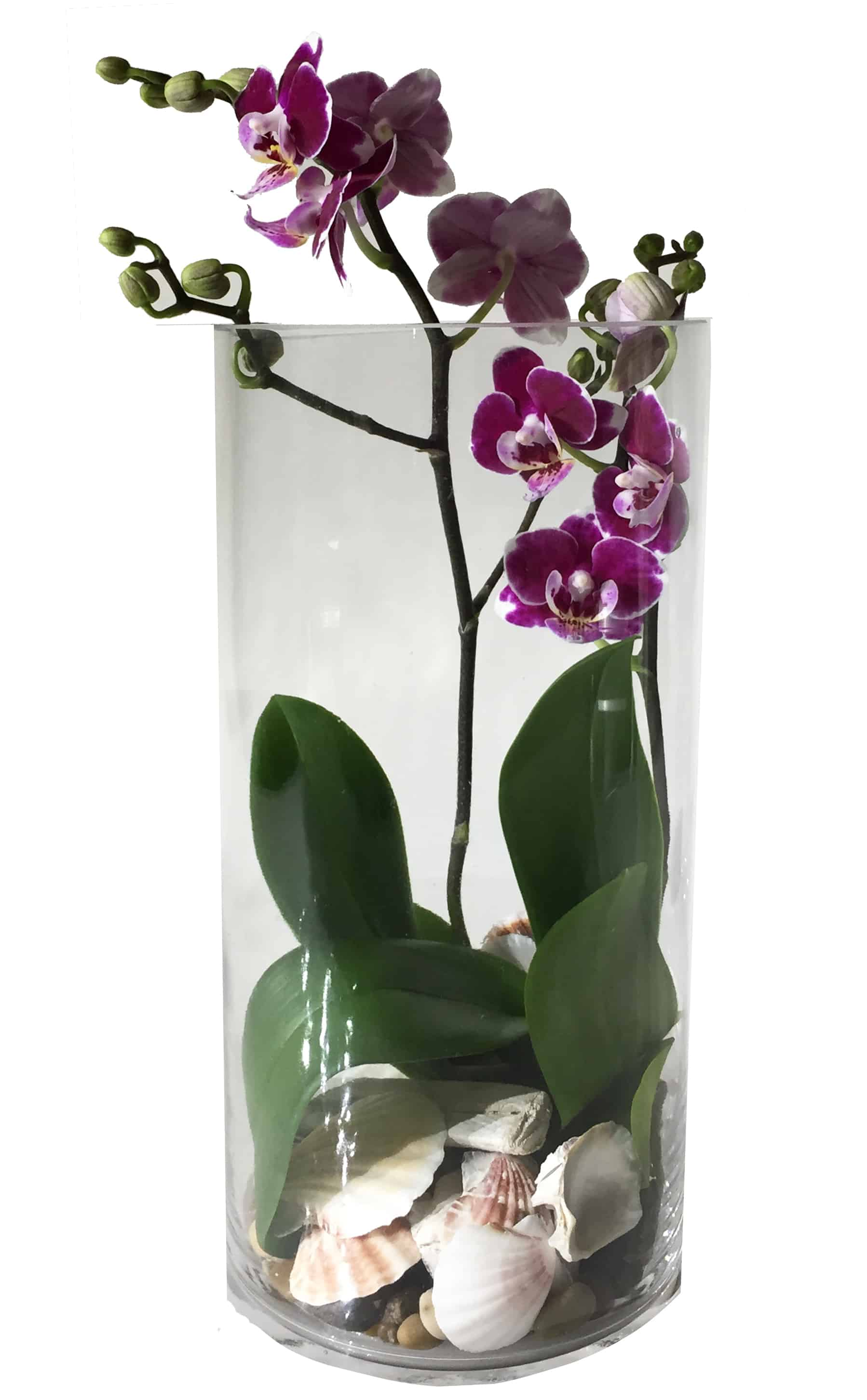 Boutique Phalaenopsis Flower Arrangement