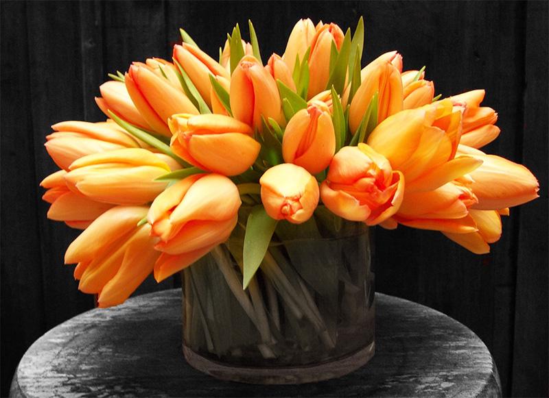 French Tulips En Masse