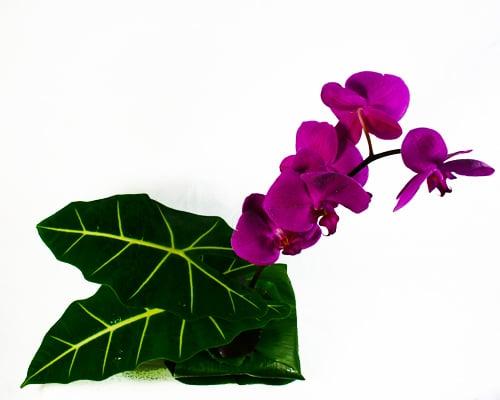 Mahalo Flower Arrangement