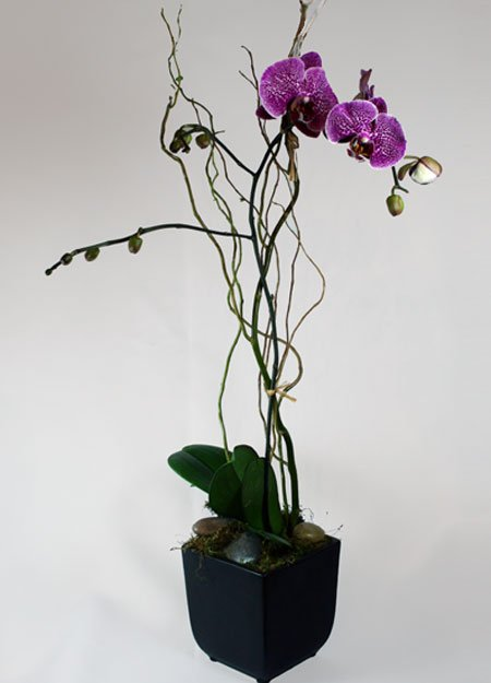 Boutique Phalaenopsis Orchid