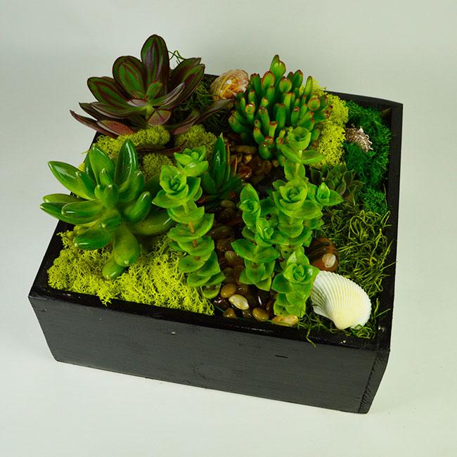 Boxed Succulent Garden
