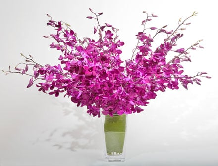 Dendrobium Pop! Flower Arrangement