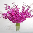 Dendrobium Pop! Floral Arrangement