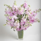 Simply Matthiola Floral Arrangement