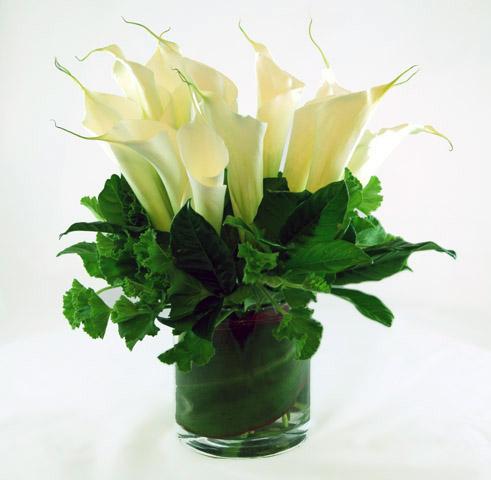 Podesta Baldocchi Flowers 415 346 1300