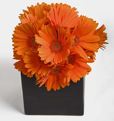 Simply Gerbera  Flower Arrangement