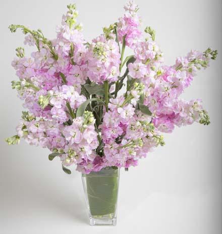 Simply Matthiola Flower Arrangement