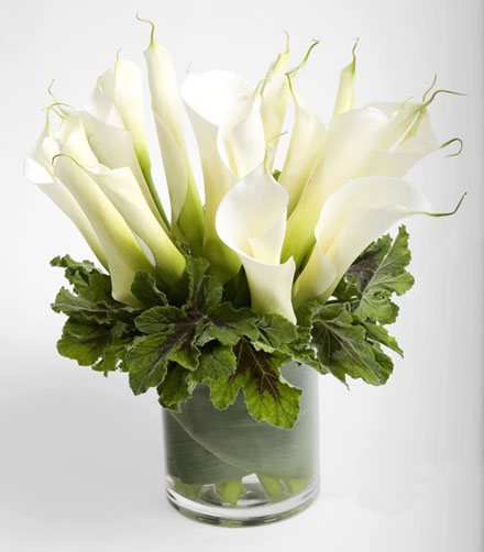 Calla Lily Paradise | San Francisco Florist Since 1871 Free Bay Area and San Francisco Flower Delivery