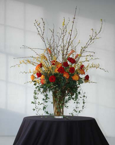 Rosa Calda, Very Tall & Elegant Flora